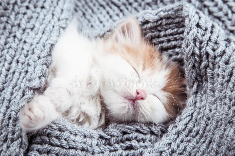 Cute kitten. Lying on grey scarf royalty free stock photography