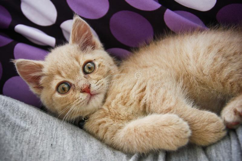 A cute kitten is lying and relaxing royalty free stock photos