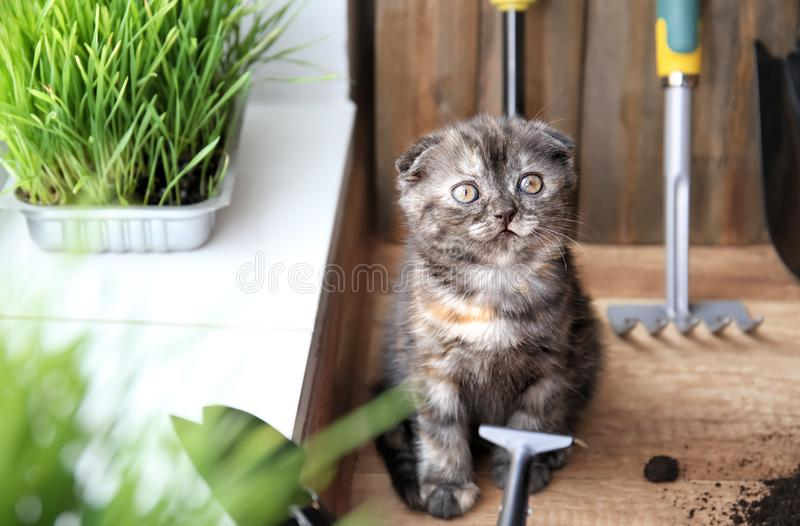 Cute kitten near gardening tools on floor at home royalty free stock photography
