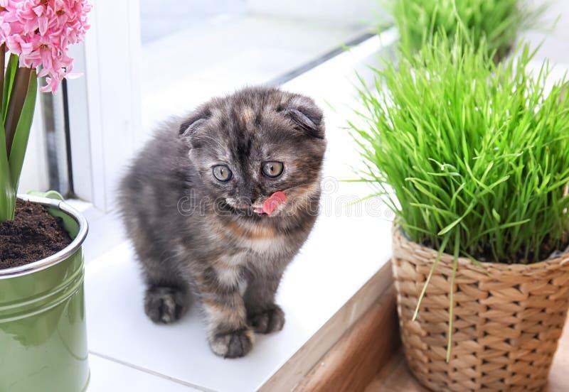 Cute kitten near green plants on windowsill at home royalty free stock photography