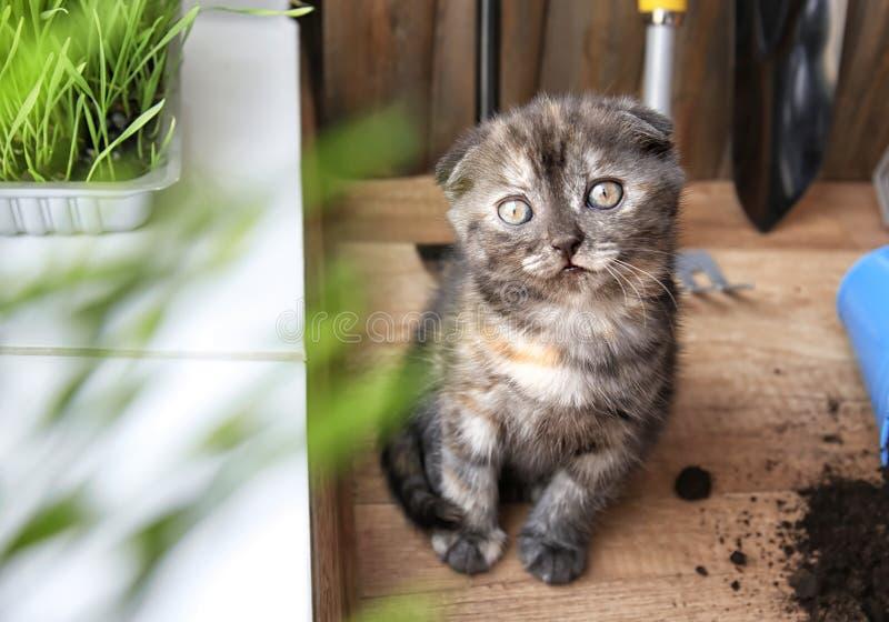 Cute kitten near window on floor at home stock images