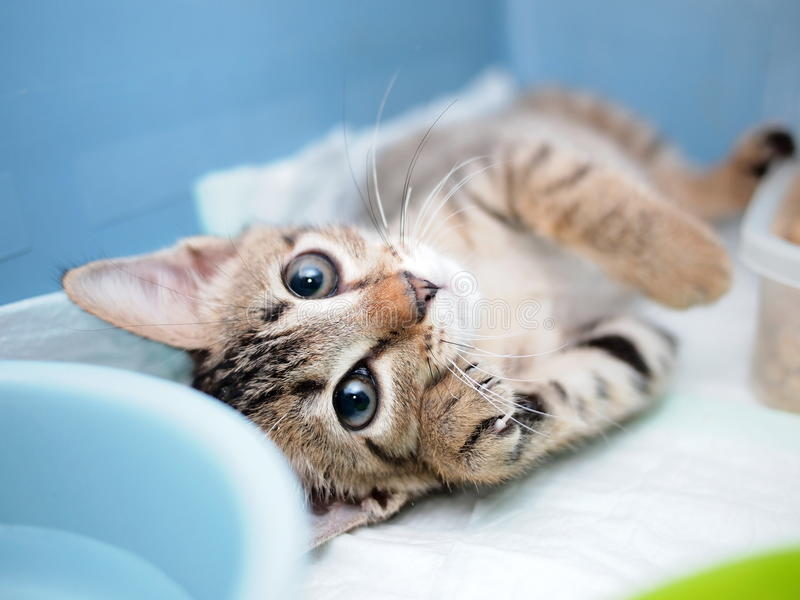 Cute kitten lying on its back with paw beside face royalty free stock images
