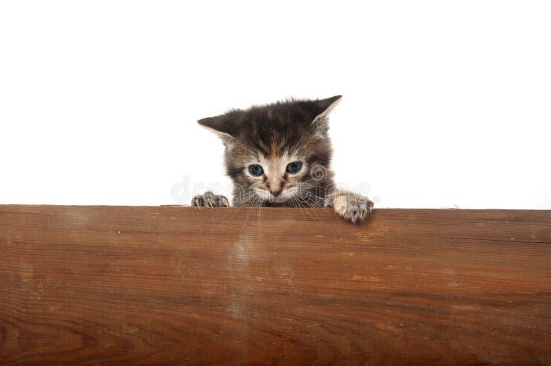 Cute kitten piiking over wooden board stock images