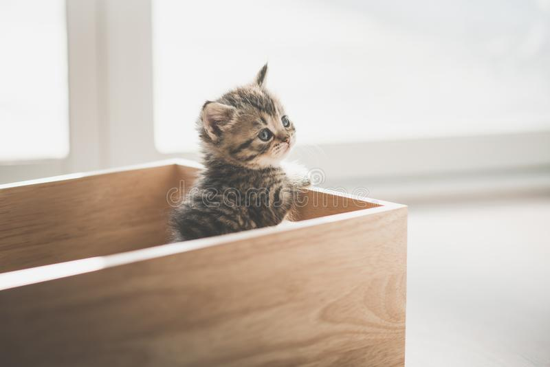 Cute kitten playig in a wooden box stock images