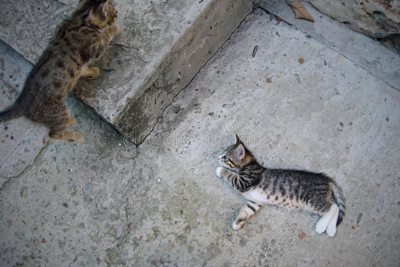 Cute kitten playing. A cute kitten playing with another kitten on concrete in a yard stock photos