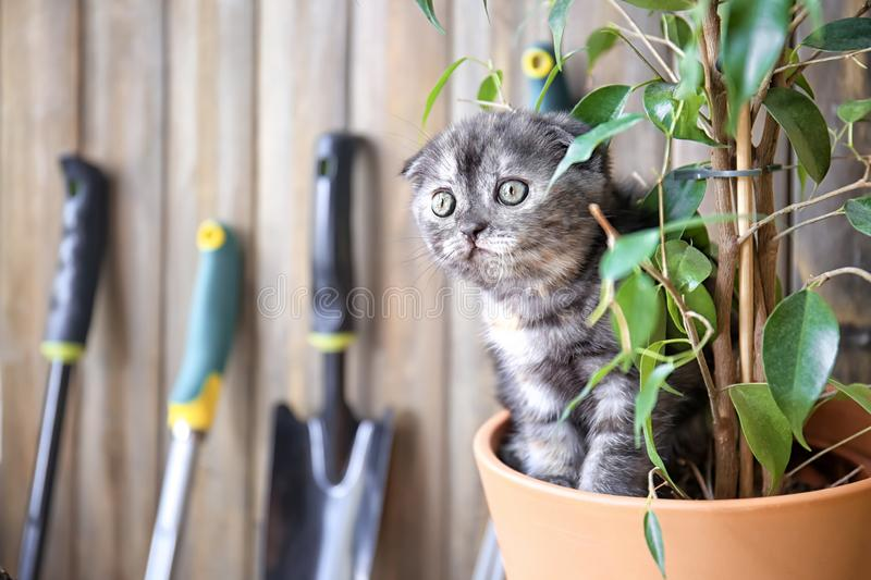 Cute kitten in pot with green plant at home royalty free stock photos