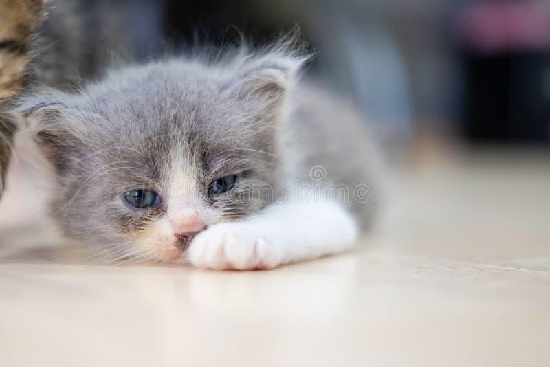 Cute kitten schläft auf dem Boden lizenzfreie stockfotos