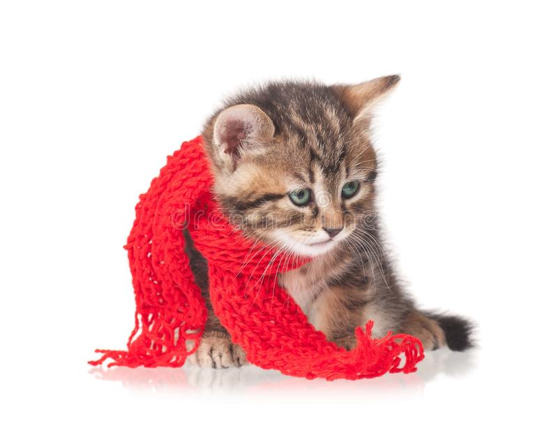 Download Cute kitten stock image. Image of doctor, isolated, knitting - 33299775