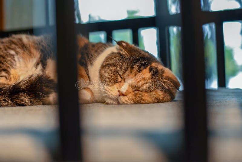 The cute kitten sleeping on the cradle. The lovely cat sleeping on the cradle, the cat sleeping at noon,Felis silvestris catus royalty free stock image