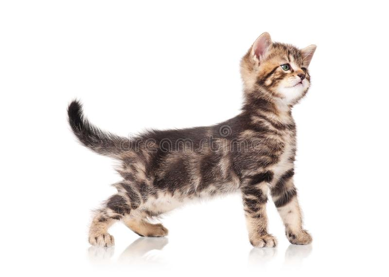 Download Cute kitten stock image. Image of happy, animal, mammal - 33299763