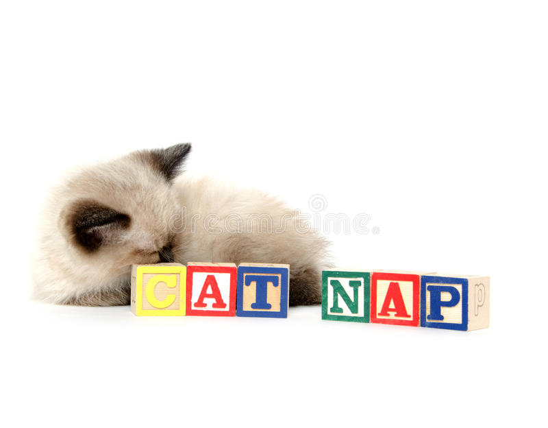 Cute kitten taking a nap royalty free stock photo