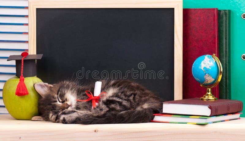 Cute kitten royalty free stock photos