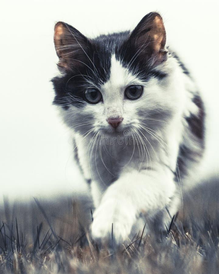 Cute kitten walking on grass royalty free stock photos