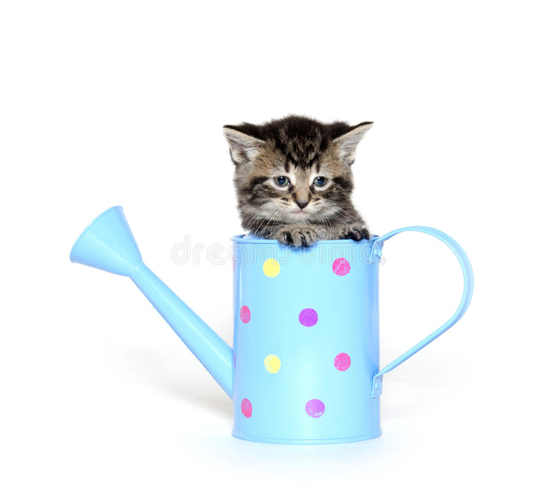 Cute kitten in watering can stock images
