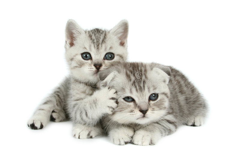 Cute kittens royalty free stock photography