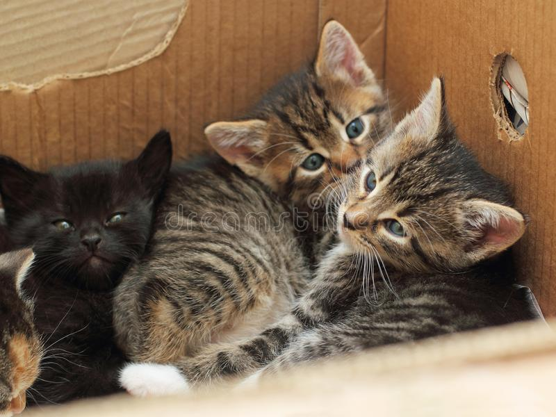 Cute kittens lying together in a cardboard box. Cute kittens five weeks old lying together in a cardboard box stock photo