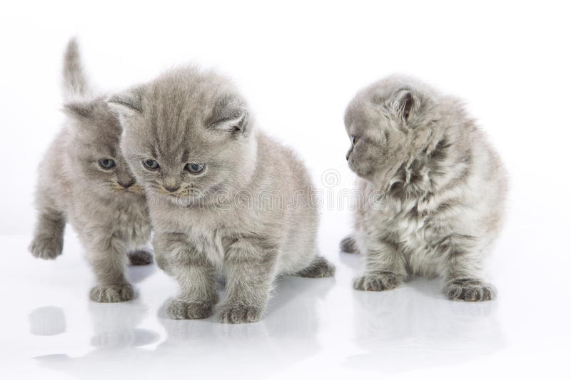 Download Cute kittens playing stock image. Image of isolated, details - 22745065
