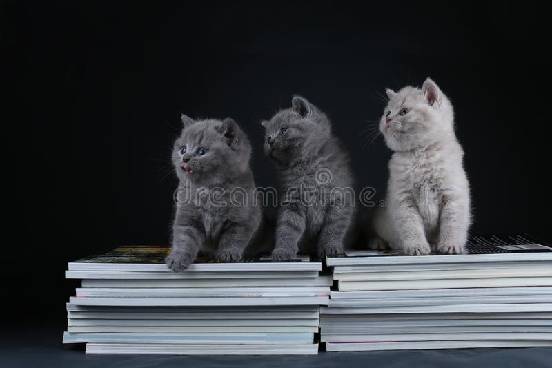 Cute kittens sitting on books, black background, copy space royalty free stock photography