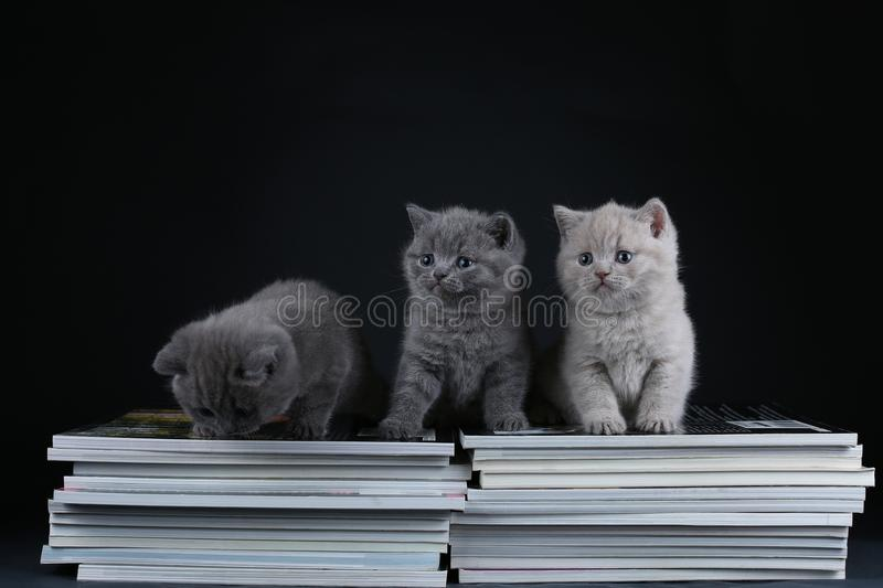 Cute kittens sitting on books, black background, copy space stock photo