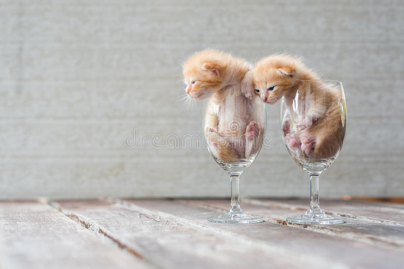 Cute Kittens in Wine Glass with textured background stock images