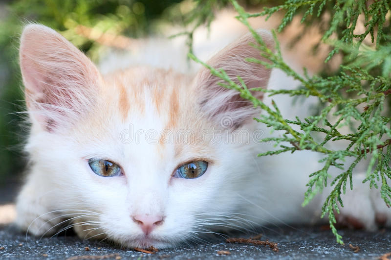 Cute kitty stock photography