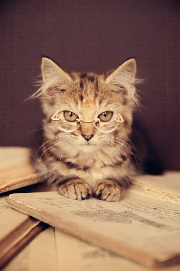 Free Cute Kitty Royalty Free Stock Photos - 18146538