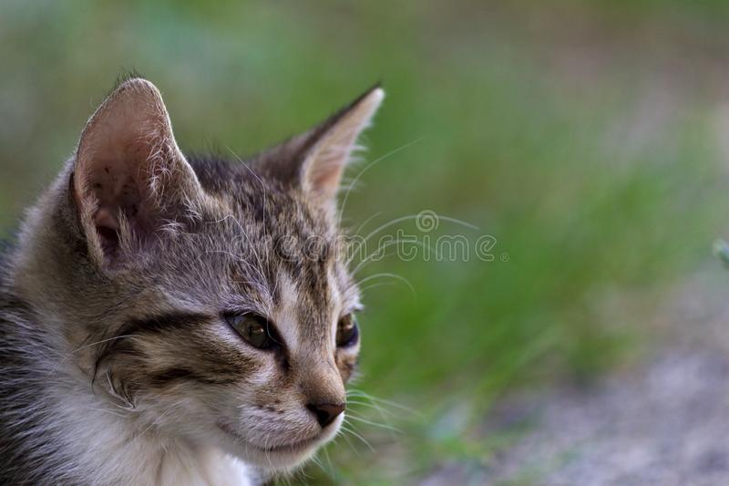 Cute kitty on blur background royalty free stock photo