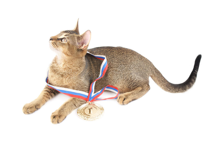 Cute Kitty With Gold Medal Royalty Free Stock Photo