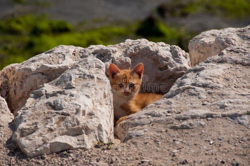 Cute Kitty hiding, Al Khobar, Saudi Arabia.  stock photography