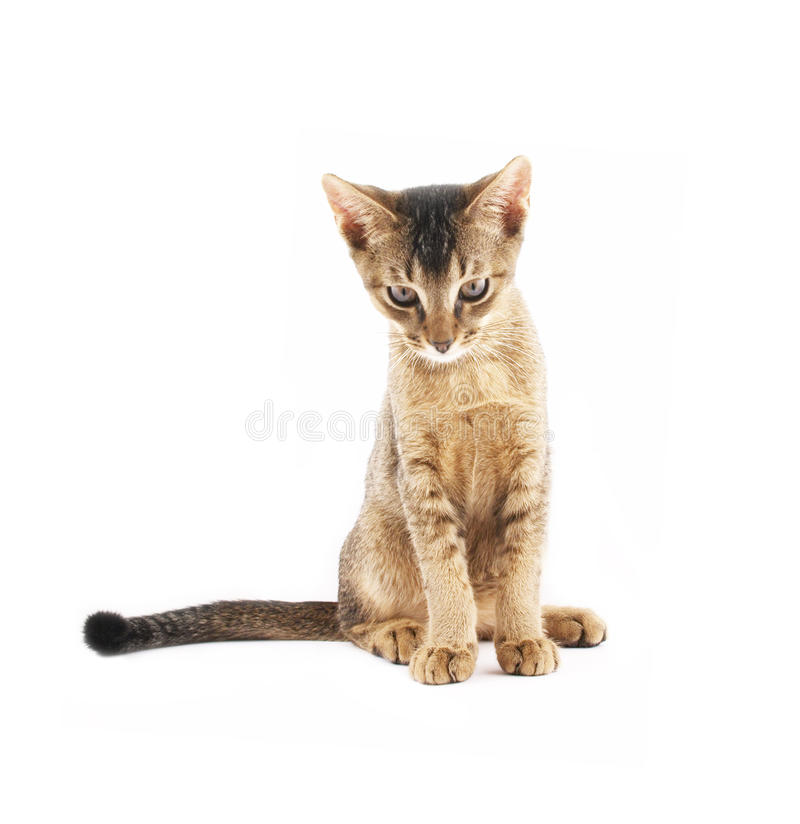 Download Cute kitty isolated stock photo. Image of toddler, cute - 10623186