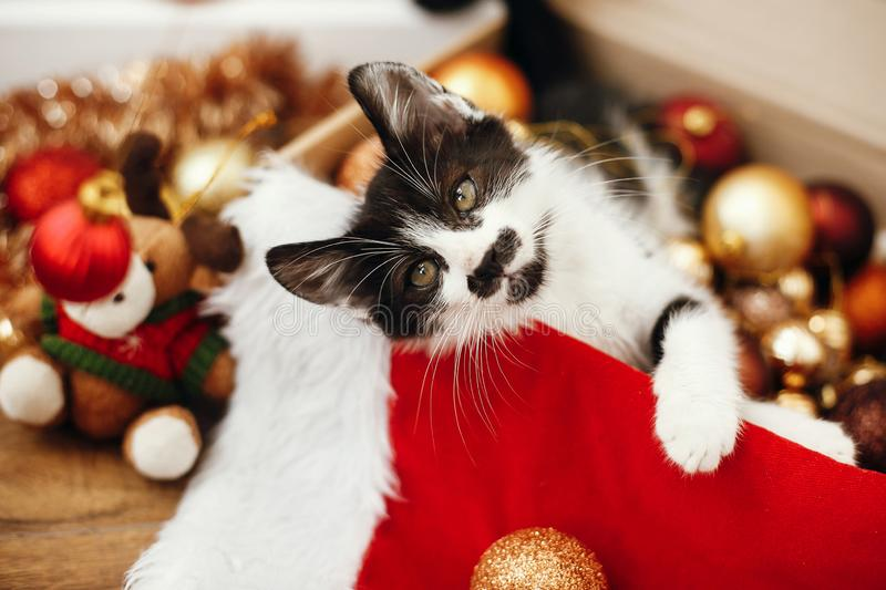 Cute kitty playing with red and gold baubles in box, ornaments a royalty free stock photos