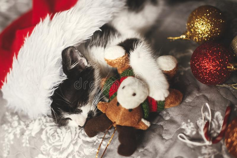 Cute kitty sleeping in santa hat with reindeer toy on bed with g. Old and red christmas baubles in festive room. Merry Christmas concept. Adorable kitten napping stock images