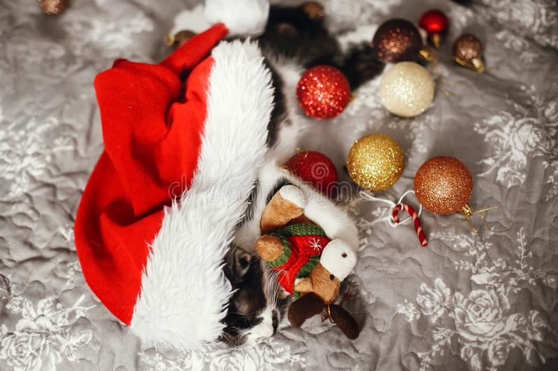 Cute kitty sleeping in santa hat with reindeer toy on bed with g. Old and red christmas baubles in festive room. Merry Christmas concept. Adorable kitten napping stock photography
