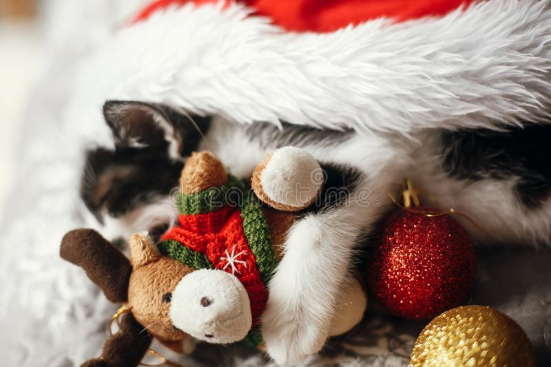 Cute kitty sleeping in santa hat with reindeer toy on bed with g. Old and red christmas baubles in festive room. Merry Christmas concept. Atmospheric image stock image