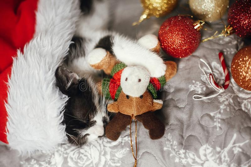 Cute kitty sleeping in santa hat with reindeer toy on bed with g. Old and red christmas baubles in festive room. Merry Christmas concept. Atmospheric image stock photos