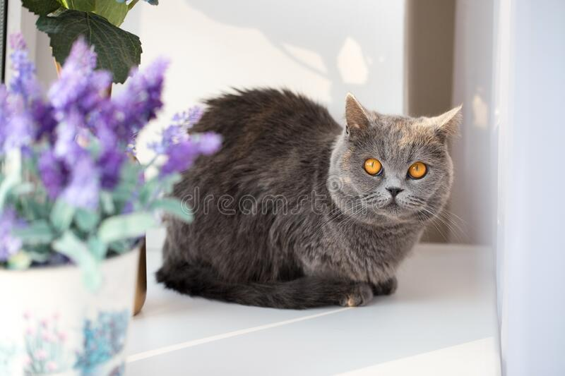 Cute kitty on the windowsill, funny looking cat. Sunny day at home royalty free stock photo