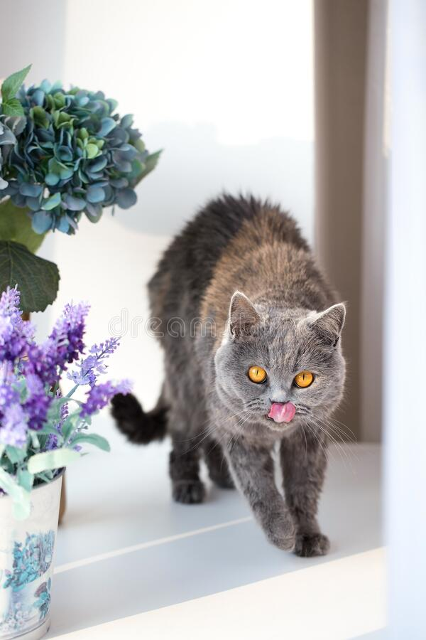 Cute kitty on the windowsill, funny looking cat. Sunny day at home stock photography