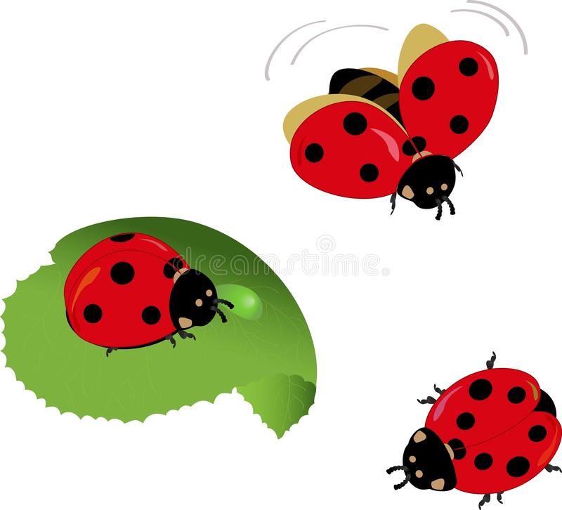 Free Cute Lady-bugs Royalty Free Stock Photo - 14781865