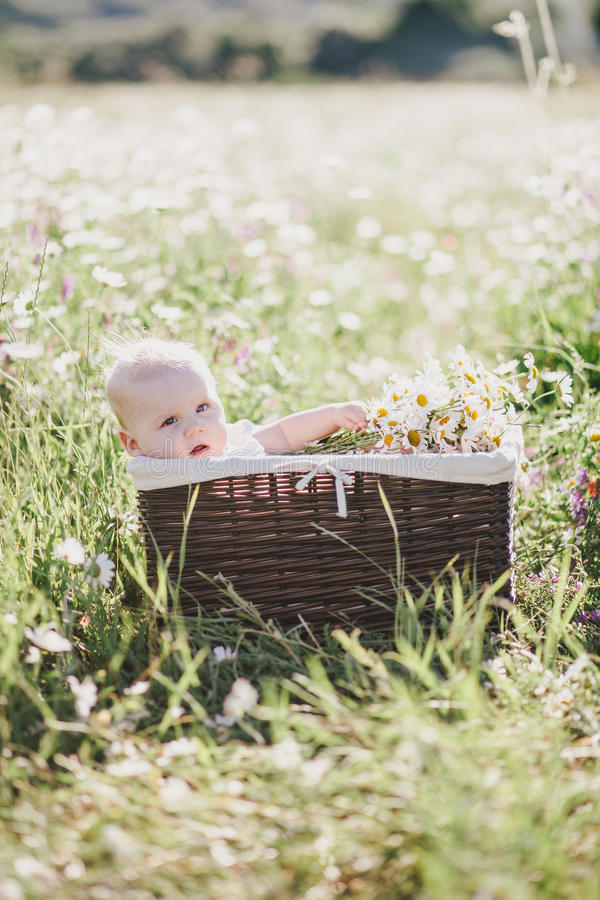 Cute little baby-boy sitting in a brown basket with chamomiles in a chamomile field royalty free stock photography