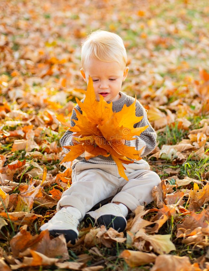 Cute little baby child playing in the autumn on the nature. Sunny autumn day. Autumnal leisure time. Happy baby boy with royalty free stock image