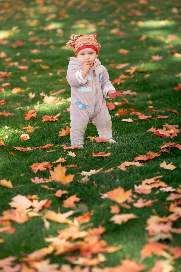 Cute little baby playing in autumn leaves royalty free stock photography