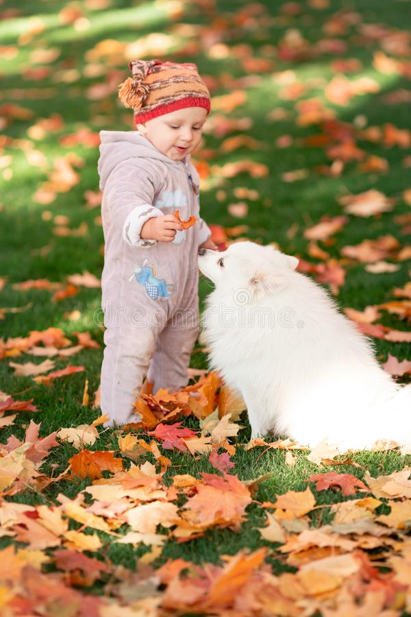 Cute little baby playing with the dog in autumn leaves stock photos