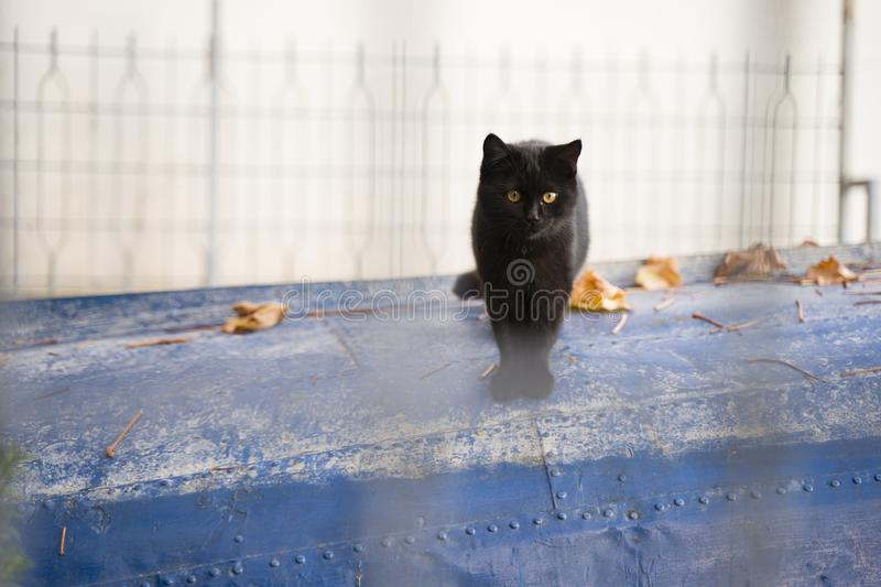 Cute little black cat with magnificent eyes standing on a lake boat stock photography