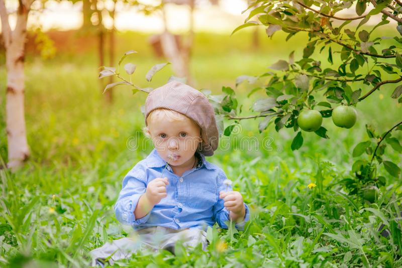 Cute little boy with blond hair in an apple garden stock images