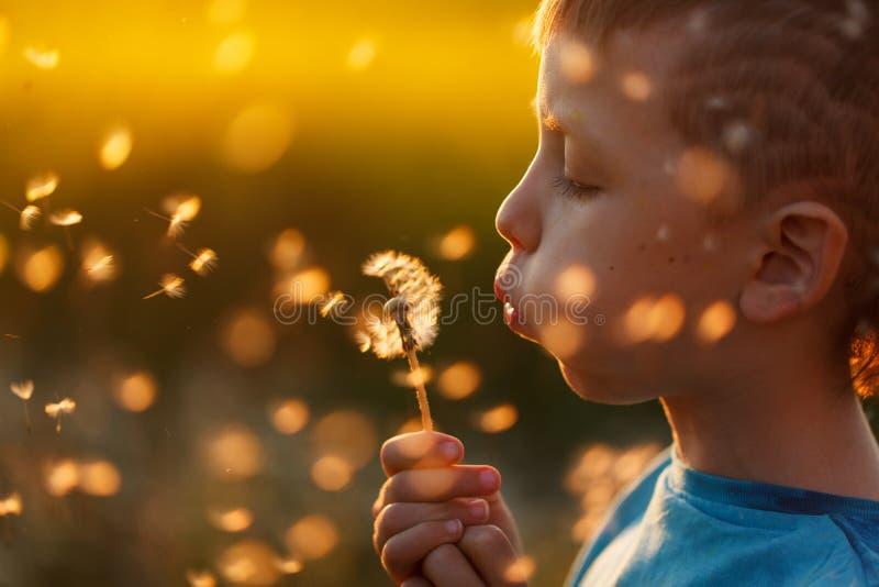 Cute little boy blows a dandelion on the summer sunset stock photo