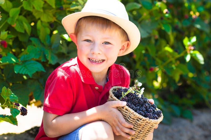 Cute little boy at boysenberry u-pick royalty free stock photos