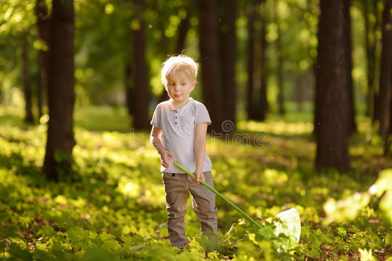 Cute little boy catches butterflies with scoop-net on sunny meadow. Young explorer of the nature. Summer activities for inquisitive child. - Image stock photography