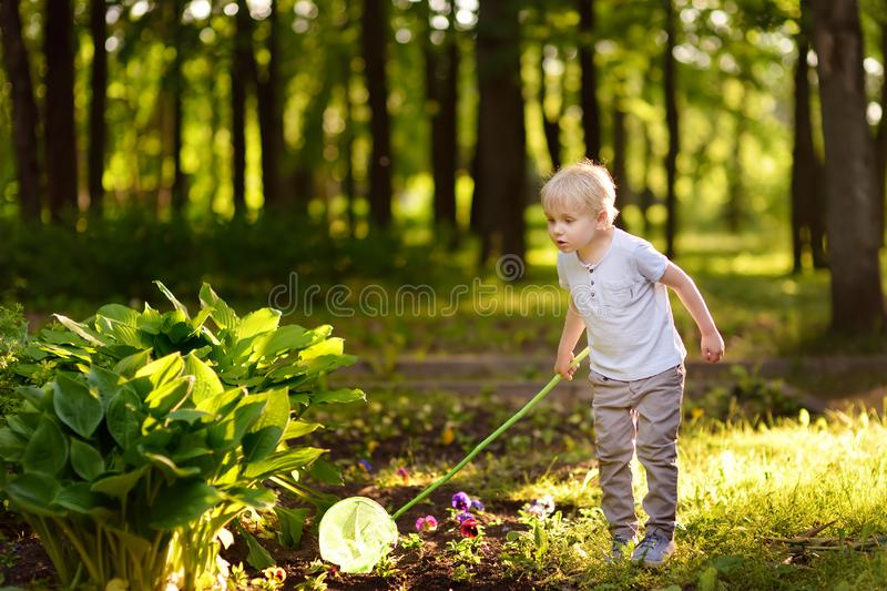 Cute little boy catches butterflies with scoop-net on sunny meadow.Study of nature. Young researcher. Summer activities for inquisitive child stock photos