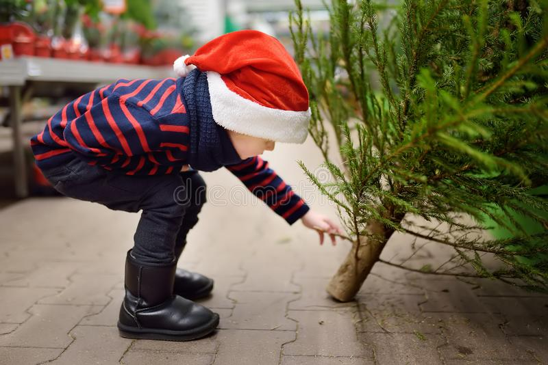 Cute little boy chooses christmas tree on market. Family Christmas shopping. Traditional Xmas decoration stock images