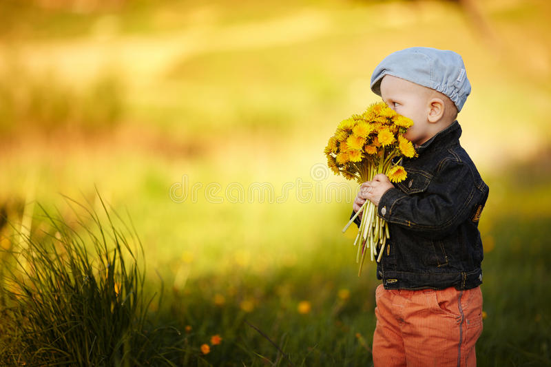 Cute little boy with dandelions royalty free stock photo